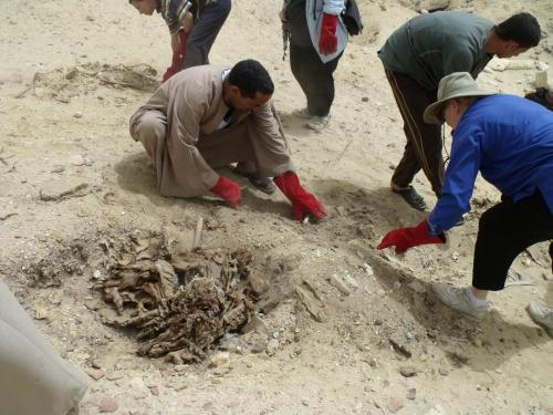 Reburying scattered mummy pieces at El Hibeh